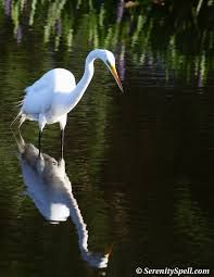 Image result for images florida sea birds