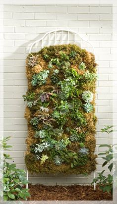 Lowes gives instructions for this inexpensive green wall garden. http://www.lowescreativeideas.com/idea-library/projects/Trellis_Moss_Garden_0409.aspx