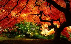 Beautiful Fall Pictures for Desktop - Best Of Beautiful Fall Pictures for Desktop , Beautiful Wallpapers Luxury Landscape Wallpaper Archives Gambar Fall Background Wallpaper, Cute Fall Wallpaper, Spring Wallpaper, Beach Wallpaper, Tree Wallpaper, Halloween Wallpaper, Autumn Nature, Autumn Trees, Autumn Leaves