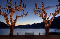 illuminated plane trees in Ascona, Ticino, Switzerland at the lakefront, Lake Maggiore at Christmas time