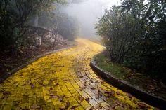 Quelque part en Caroline du Nord, découvrez le parc d'attractions abandonné et terrifiant du Magicien d'Oz | The Creators Project