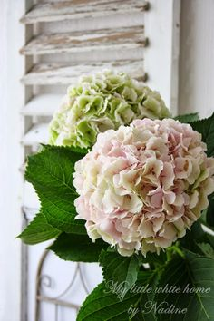 My little white home by Nadine: Hortensia's ~ Hydrangeas Hortensia Hydrangea, Pink Hydrangea, Peonies And Hydrangeas, Rose Bush, Diy Garden Projects, White Houses, Little White, Flower Photos, Dream Garden