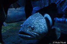 Dubai Atlantis The Palm Lost Chambers of Atlantis Riesiger Fisch