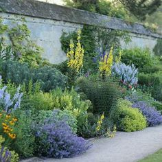 OXFORD UNIVERSITY BOTANICAL GARDENS. This garden was started nearly 400 years ago and has always been a place of learning and botanical research. I am not a fan of yellow in a garden but this has been so skillfully planted with the cool blues of nepeta and salvias acting as foil for the rudbeckia and towering verbascum all gently balanced with the limes of the euphorbia Characias Wulfenii and alchemilla mollis. Timothy Walker via The English Garden #botanicalgarden…
