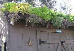 living roof garden shed
