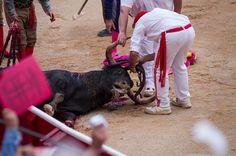 bullfighting - Bing Horrible People, Goats, Animals, Animales, Animaux, Animal, Animais, Goat