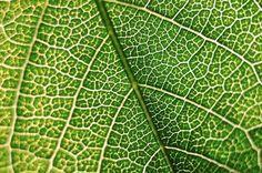 Pele Vegetal  #jardim #jardiland #natureza #green #plantas