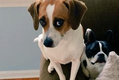 How 13 Dog Breeds Got Their Names | Mental Floss