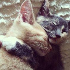 Cuddling cats (Photo by Kristine W.)
