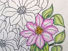 Download the coloring book (PDF file).  Print out (A4 format 210x297 mm 8.3 x 11.7 Inches).  Get pleasure from the colorization process.  Coloring these beautiful clematis... #clematis #relax