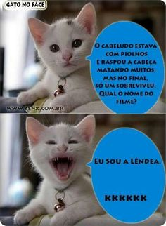 Gatinho 06