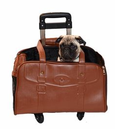 #APetWithPaws,  now on wheels! #EcoFriendly #PetProducts