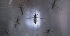 Технологии будущего: Microsoft разработал работа для уничтожения комаров http://joinfo.ua/inworld/1197774_Tehnologii-buduschego-Microsoft-razrabotal-rabota.html