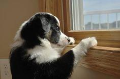 Los perros necesitan atención, pero también deben aprender a estar solos. Aquí te damos unos trucos para enseñar a tu perro a quedarse solo en casa