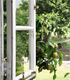 Bunny Mellon at Oak Spring Farms Virginia garden. Pear tree outside the window.