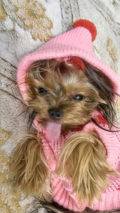 Yorkies, Yorkshire Terrier, I Love Dogs, Tea Cup, Cute Puppies, Images, Cute Animals, Winter Hats, Crochet Hats
