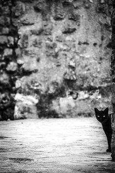 Does curiosity really kill the cat?