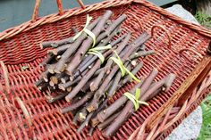 Pet Chew Sticks, Pear and Crabapple Medium Sticks, Rodent Chew Toy, Pet Supply, Rat Chinchilla Guinea Pig Gerbil, Baked Wood Pet Dental Care