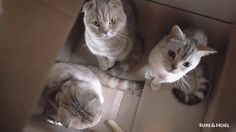 Meow! check this Gif by Giphyon #CatOnWeb cats kitten catsonweb cute adorable funny sleepy animals nature kitty cutie ca