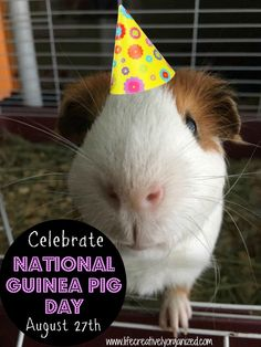 August 27th is National Guinea Pig Day. If you are looking for a gentle, friendly, easy-to-take-of pet, I highly recommend a Guinea pig.