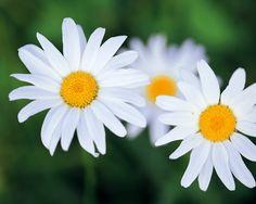 톡톡튀며 세상을 즐기자 :: 예쁜 꽃 배경화면 모음