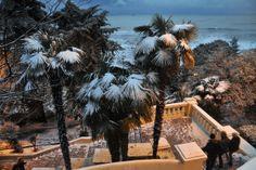 Сочи. Пальмы под снегом