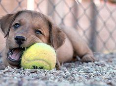 Un chien et sa Balle