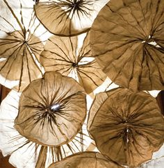 Lily Clouds, paper sculpture by Jocelyn Chateauvert