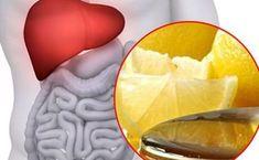 Pe langa faptul ca ajuta in procesul de regenerare al sângelui, ficatul ajuta la intarirea și stimularea digestiei alimentelor in organism. În plus, cur