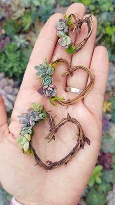 Mini Living Succulent Heart Wreath Magnets - Set of 3 Propagating Succulents, Cacti And Succulents, Planting Succulents, Cactus Plants, Succulent Gifts, Succulent Wreath, Garden Types, Garden Art, Mosaic Garden