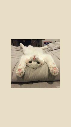 cats cute wallpaper Source by leezagkli videos wallpaper cat cat memes cat videos cat memes cat quotes cats cats pictures cats videos Wallpaper Gatos, Funny Cat Wallpaper, Tier Wallpaper, Cute Cat Wallpaper, Cute Disney Wallpaper, Cute Cartoon Wallpapers, Animal Wallpaper, Iphone Wallpaper Cat, Wallpaper Lockscreen