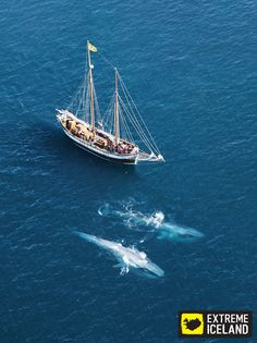 """""""Come to Iceland and watch the whales. A meeting with these giants of the blue is unforgettable."""" Click image to read more about Extreme Iceland Whale Watching tours."""