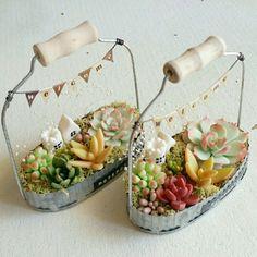 『デザフェスのつづき』 Succulent Gardening, Planting Succulents, Container Gardening, Planting Flowers, Small Garden Fairies, Recycle Cans, Tin Can Crafts, Little Gardens, Diy Planters