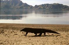 Isla de Komodo, en F