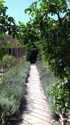 National Trust, Days Out, Vineyard, Sidewalk, Outdoor, Outdoors, Vine Yard, Side Walkway, Walkway
