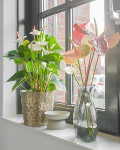 Het is bijna magisch, het zonlicht dat via de ramen de keuken van Binti Home in schijnt. En hoe gezellig staan de anthuriums in het raamkozijn? Naast woonaccessoires zijn planten en bloemen dé manier om kleur toe te voegen aan een interieur. Zeker anthuriums in bijzonder mooie kleuren brengen in een handomdraai tropische sferen in huis. | Binti Home keuken - Binti Home inspiration - keuken inspiratie - keuken interieur - planten in de keuken - plant keuken #anthurium #bloemen Green Kitchen, Cool Kitchens, Glass Vase, Plants, Home Decor, Style, Swag, Decoration Home, Room Decor