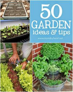 http://momsbyheart.net/50-garden-tips-ideas/