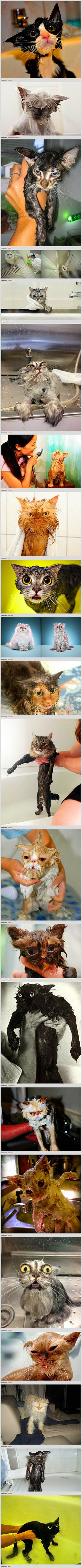 Because cats are widely considered to be the cool and cute overlords of the internet, we thought it was about time to bring them down a notch by showing you just how silly cats look when they get wet.