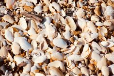 Beach Shell Nature Background Nature Background in Full Frame. Images Of Peace, Abstract Photos, Image Now, Shells, Royalty Free Stock Photos, Beach, Frame, Nature, Pink