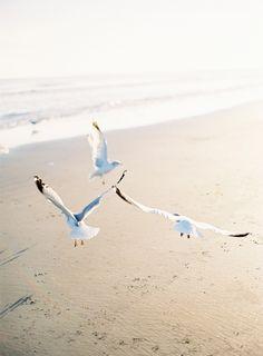 Sea Gulls playing on Venice Beach, Venice, Florida.