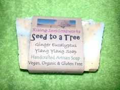 Seed to a Tree Ginger Eucalyptus Ylang Ylang Soap Natural Handcrafted, Vegan, Organic and Gluten Free For more info, visit link Organic Soap, Seeds, Artisan, Gluten Free, Vegan, Natural, Link, Food, Products
