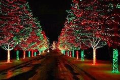 Lighted Tree-Lined Drive::Imagine coming home to this every eve thru the holidays!