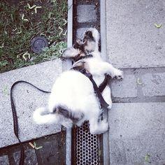 heididahlsveen:  I #fit into anything, says #atsjoo #puppy #valp #dog #hund #mixed #iphone #instagram
