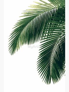 'Tropical Palm Leaves' Poster by Freetime Activities, Plant Wallpaper, Nature Wallpaper, Leaves Wallpaper, Trendy Wallpaper, Fabric Wallpaper, Pattern Wallpaper, Affinity Photo, Leaf Template