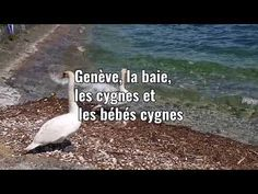 Canton de Genève , Genf , Geneva - YouTube Films, Youtube, Geneva, Movies, Film Books, Movie, Film