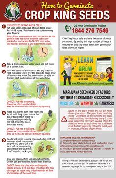 Marijuana Seeds Canada - Germinate - Crop King Seeds