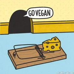 even mice choose to go vegan Vegetarian Quotes, Vegan Quotes, Vegan Vegetarian, Vegan Memes, Vegan Humor, Vegan Animals, Vegan Lifestyle, Animal Rights, Going Vegan