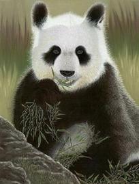 PANDA BEAR CROSS STITCH PATTERN