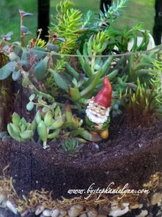 Do you need a layered system for succulent terraniums | containers and are not recommended for enclosed terrariums. Succulents ...