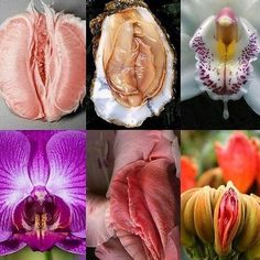 This is on board 1 - close up flowers that look like vaginas Sacred Feminine, Divine Feminine, Mother Earth, Mother Nature, Yoni Steam, Adult Humor, Erotic Art, Pictures, Photography